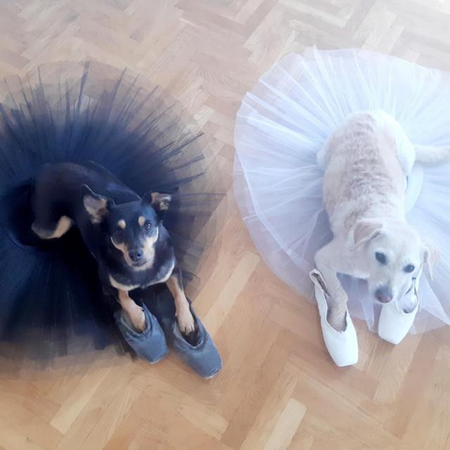 Tita i Mašenjka kao pseća inačica Crnog i Bijelog labuda