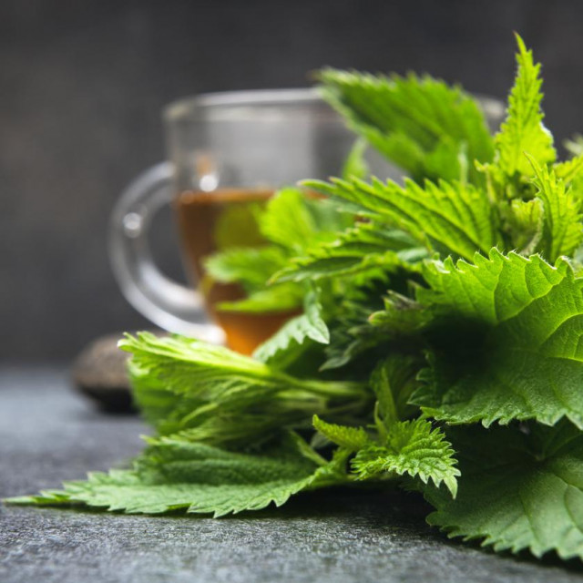 A cup of nettle tea with space