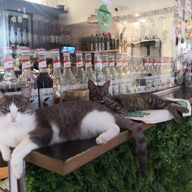 Cat caffe Zagreb, jedini mačji kafić u Hrvatskoj