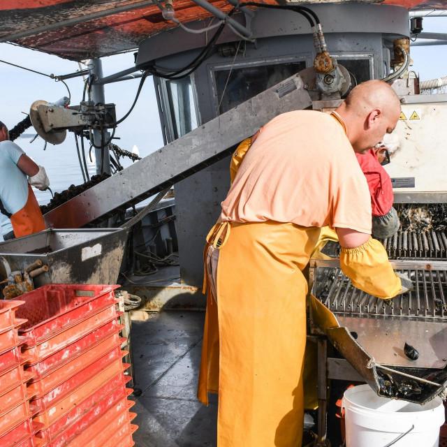 Na 11 metara dugom brodu Laren uigrano rade Vladimir Bašić i njegova dva suradnika, Joza i Sandi, koji školjke nakon vađena pakiraju u mreže i pakete od šest kilograma
