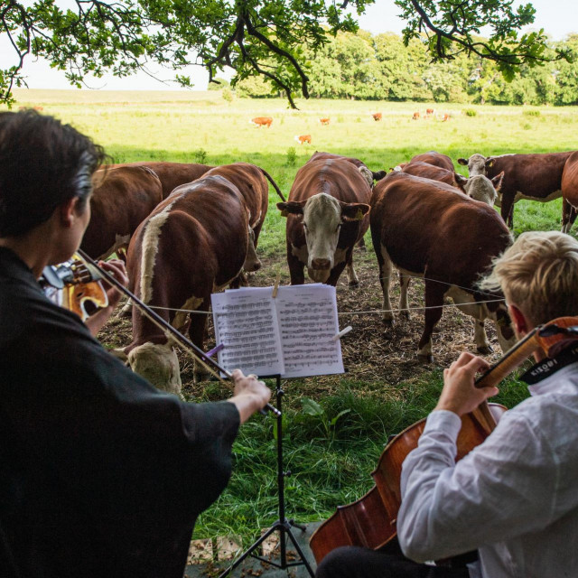 Violončelist nema namjeru prestati s koncertima za krave