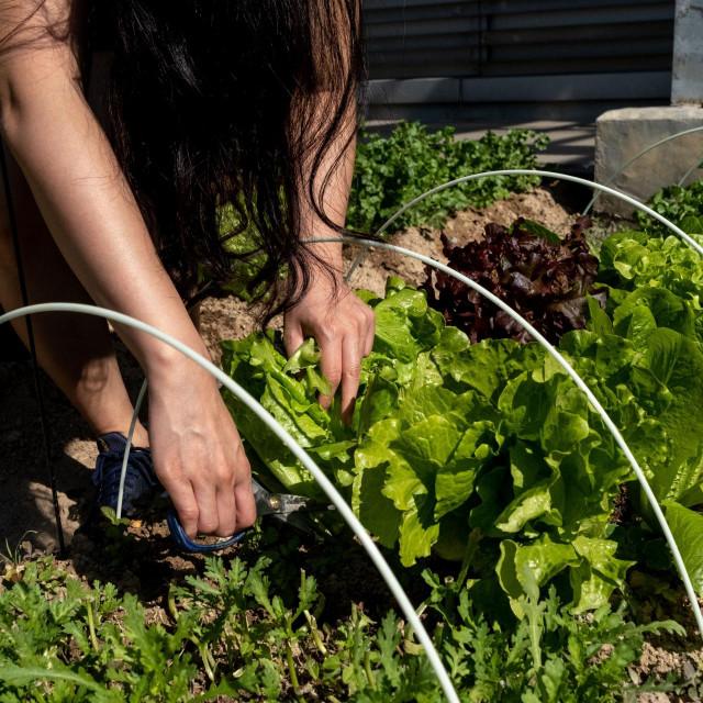 Vrtovi na krovovima u Hong Kongu su postigli veliku popularnost i uspjeh