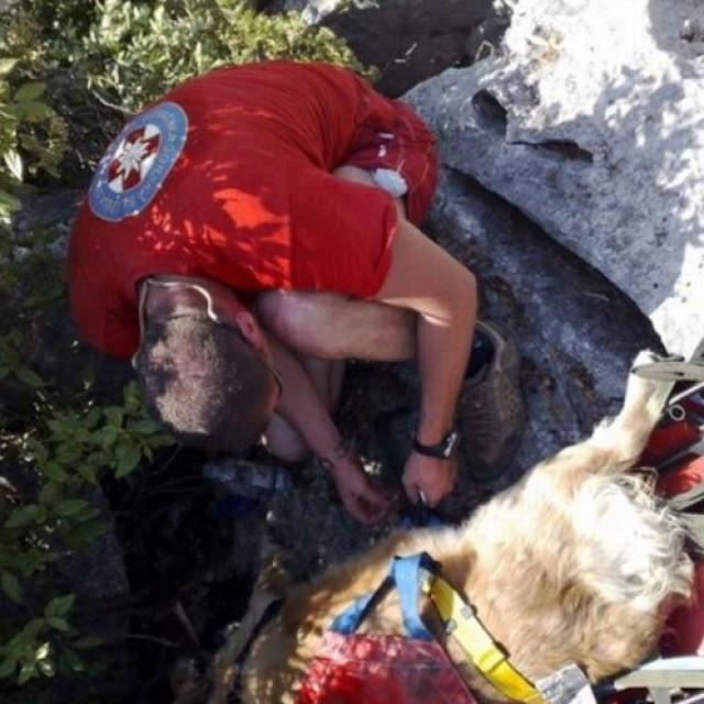 Spašavanje psa