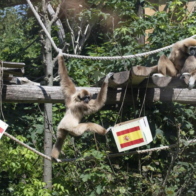 Obitelj gibona u Zoološkom vrtu u Zagrebu
