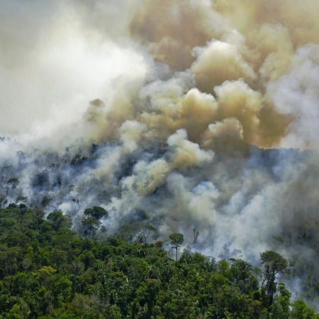 Požar u prašumi