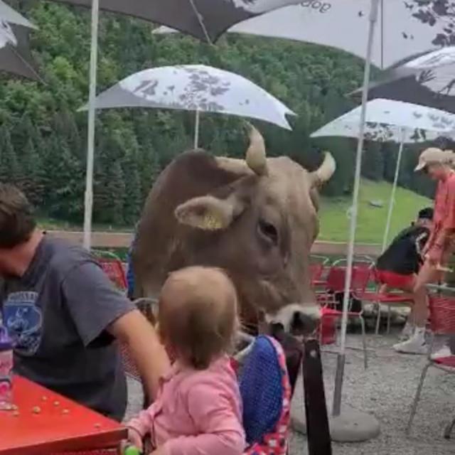 Krava u restoranu