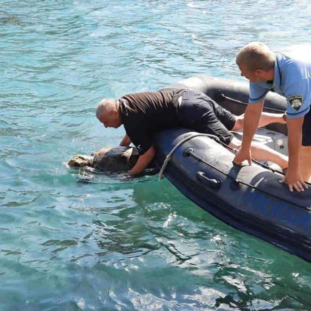 Izvlačenje Amadea iz mora, foto: Aquarium Pula