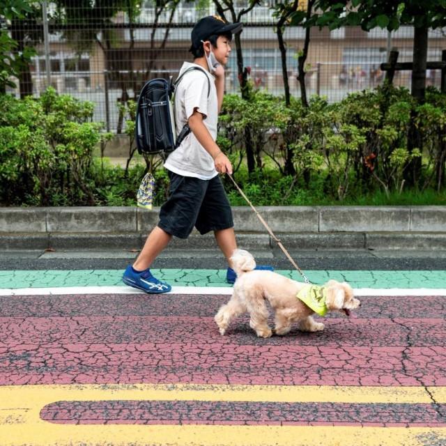 Odlazak u školu u pratnji psa