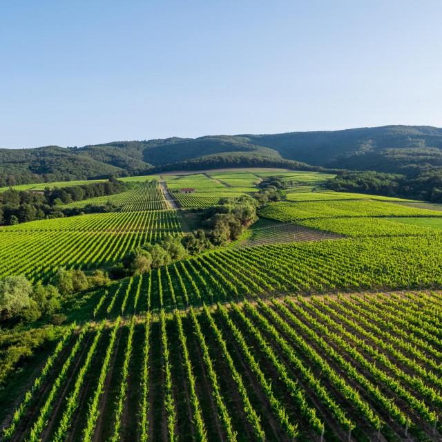 Vinogradarski položaji vinarije KUTJEVO -<br /> idealni za proizvodnju vrhunskih i premium vina.