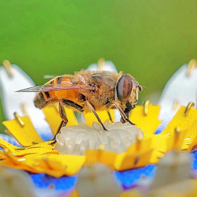 "<br /> <br /> Rad Matilde Boelhouver ""Insectology: Food for Buzz"" omišljen je kao rješenje jednog od problema današnjeg doba"