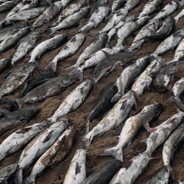 Ribe nasukane na plaži/Ilustracija