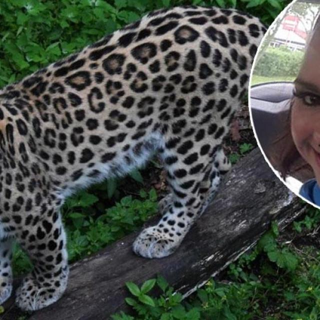 Ilustracija leoparda, Jessica Leidolph (u krugu)