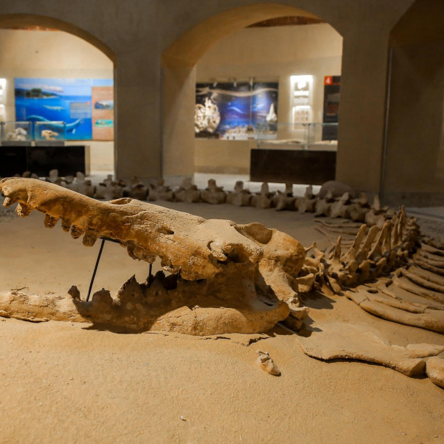 Fosili kitova, krokodila i drugih životinja izloženi su u Muzeju fosila i klimatskih promjena u Wadi El Hitan/Ilustracija
