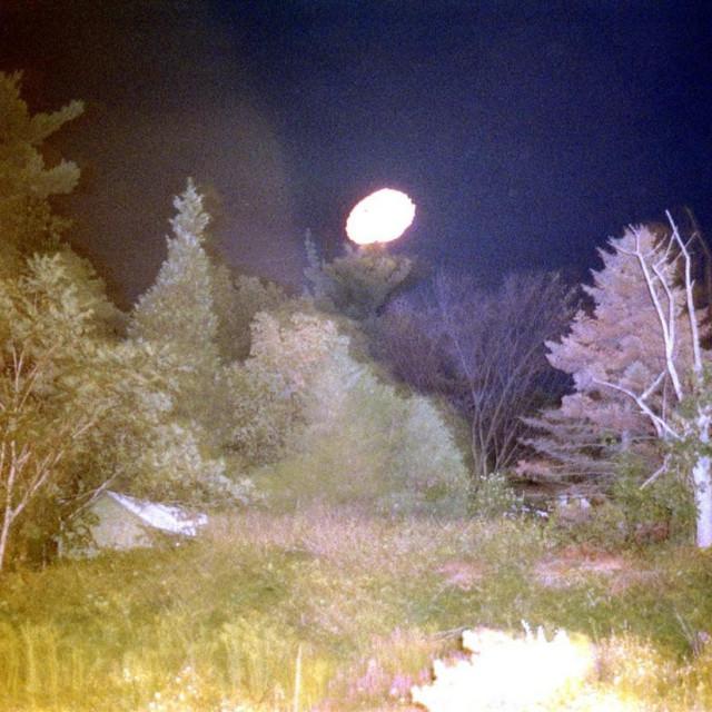 Šuma (ilustracija)