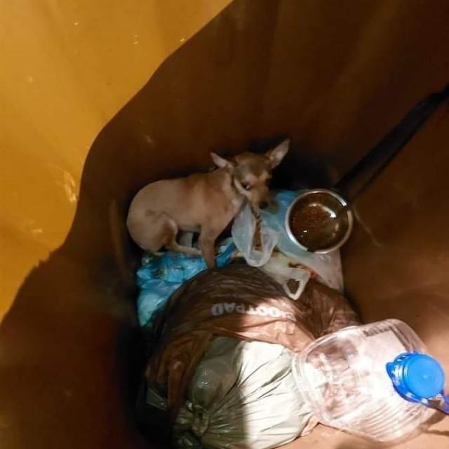 Pas u kanti za smeće