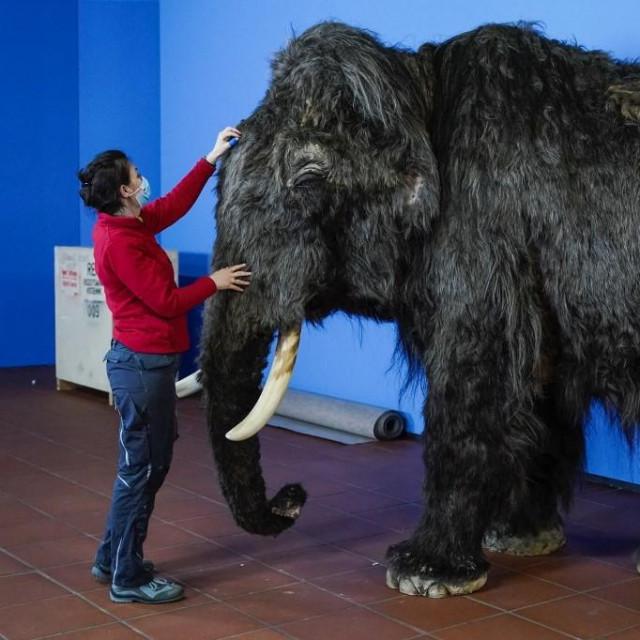 Sastavljanje lutke mamuta za potrebe izložbe