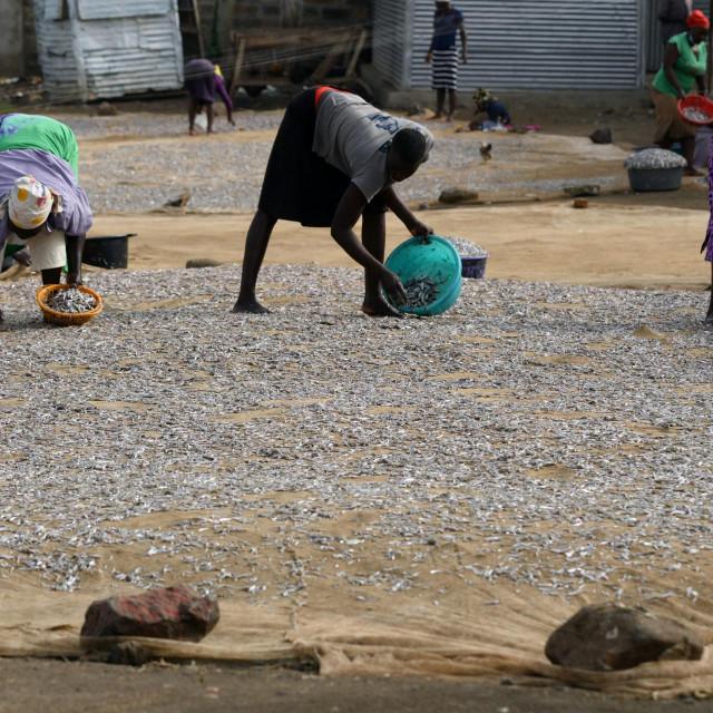 Suša u Keniji, 2021.