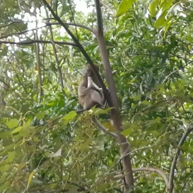 Dva tjedna staro crno-bijelo štene, po imenu Saru, majmun je zgrabio i odveo na vrh stupa za električnu energiju