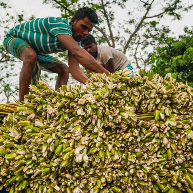 Farmer u Bangladešu