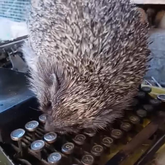 Jež na pisaćoj mašini<br />