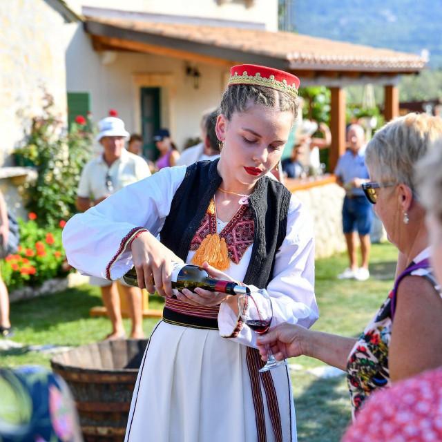 Organizirana berba grozdja za turiste na imanju opg Vodopic u Konavlima.<br />